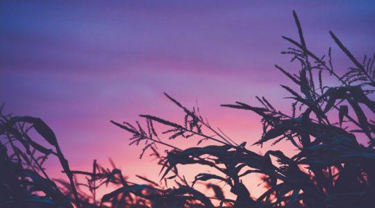 Découvrez les tendances innovation dans l'agroalimentaire